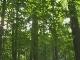 Лесные прогулки в Юрмале