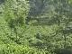 Палампур