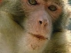 Rhesus Monkeys Nature Reserve