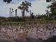 Рисовые плантации Керала