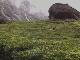 Чайные плантации Керала