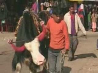 Сикким:  Индия:      Активный отдых в Сиккиме