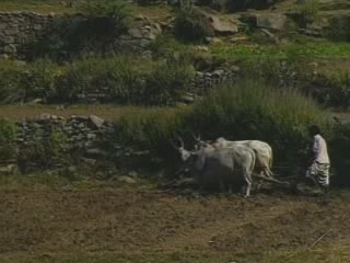 Раджастхан:  Индия:      Сельское хозяйство Раджастхана