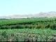 Сельское хозяйство Таджикистана