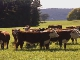 Сельское хозяйство в Тасмании