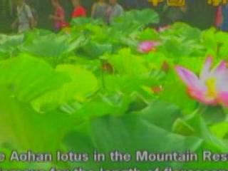 Чэндэ:  Китай:      Розовый лотос в Бишушаньчжане