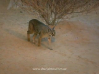 Sharjah :  Sharjah:  United Arab Emirates:  