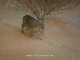 Arabian Wildlife Centre (United Arab Emirates)