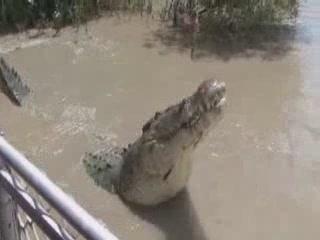 オーストラリア:      Australian crocodile