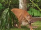 Big Cats in Gatorland