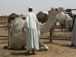 写真 Camel Fair in Riyadh 買物