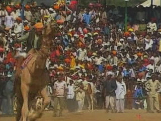 Pushkar:  拉贾斯坦邦:  印度:  