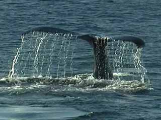 Massachusetts:  アメリカ合衆国:  