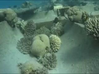 アカバ:  ヨルダン:      Coral reefs in Aqaba