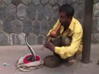 インド:      デリー