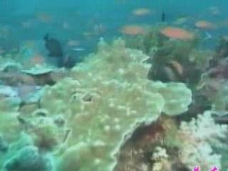 北海市:  中国:      Diving Beihai
