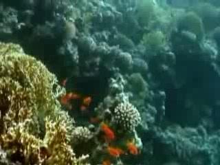 亞喀巴:  约旦:      Diving in Aqaba