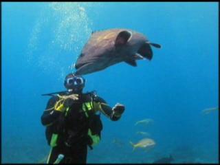ベリーズ:      Diving in Belize