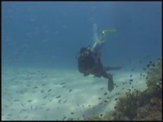 Fiji:      Diving in Fiji