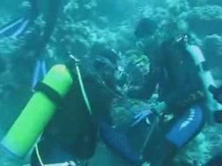 Jeddah:  Saudi Arabia:      Diving in Jeddah