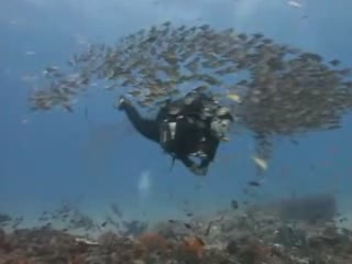 Ponta do Ouro:  莫桑比克:  