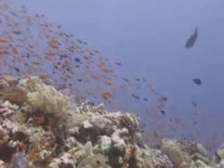 ヤンブー:  サウジアラビア:      Diving in Yanbu
