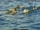Дельфин-тур на Занзибаре