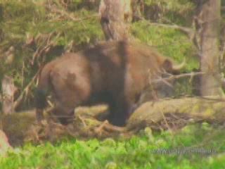 阿迪格共和国:  俄国:      Fauna of Adygeya