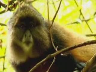 ルワンダ:      Fauna of Rwanda