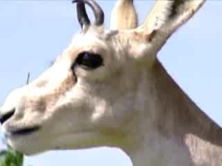 Таджикистан:      Животный мир Таджикистана