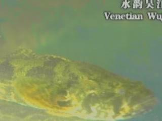 Wujiang:  Shanghai:  China:      Fishing in Wujiang
