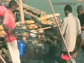 桑给巴尔群岛:  坦桑尼亚:      Fishing in Zanzibar
