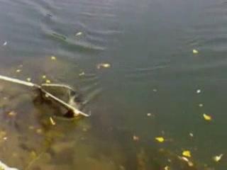 カルロヴァツ:  クロアチア:      Fishing on the Kupa