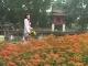 Flora Hanoi