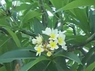 Акаба:  Иордания:      Флора в Акабе