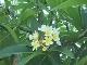 Флора в Акабе