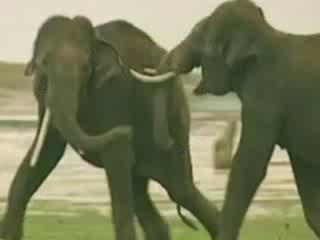 Karnataka:  India:      Fauna of Karnataka