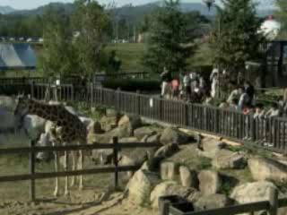 福山市:  日本:      福山市立動物園