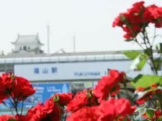 Фукуяма:  Япония:      Розы Фукуямы