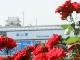 Fukuyama Roses