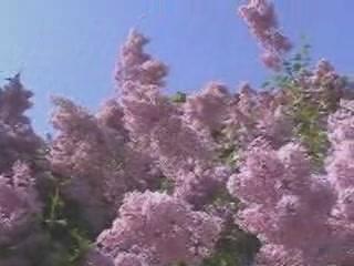 Киев:  Украина:      Национальный ботанический сад