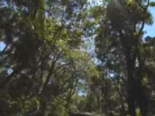 巴西:      伊瓜苏国家公园 (巴西)