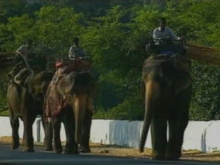 Раджастхан:  Индия:      Индийский слон