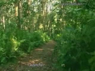 Zanzibar Archipelago:  Tanzania:      Jozani Forest
