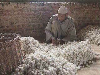 ジャンムー・カシミール州:  インド:      Kashmir silk