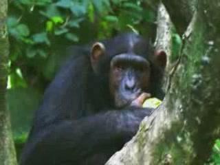 Burundi:      Kibira National Park