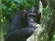 基比拉國家公園