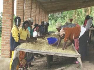 卢旺达:      Kinunu