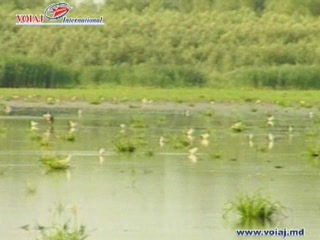 モルドバ:      Lake Beleu