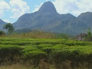 图片 Landscape of Mozambique 风景